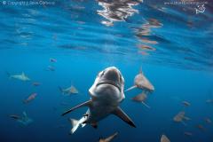 shark-week-4