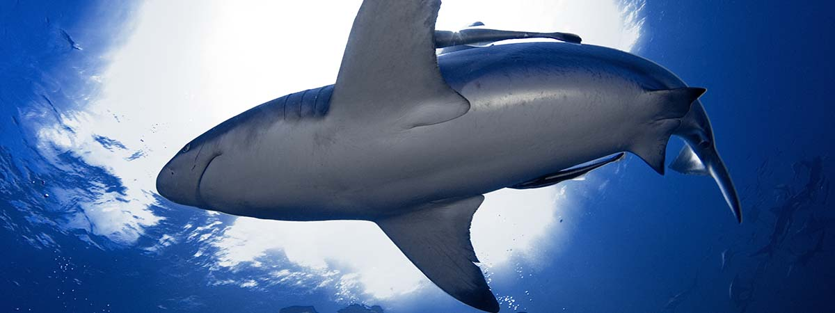 durban shark diving packages