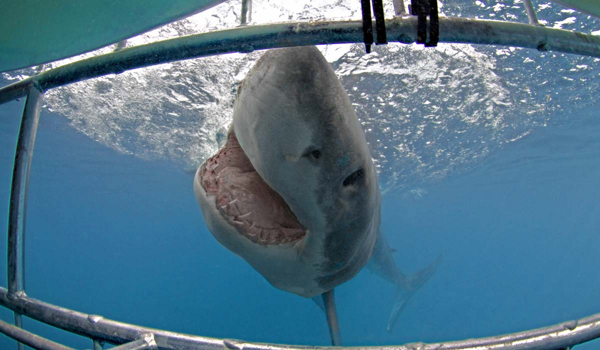 gansbaai shark diving packages