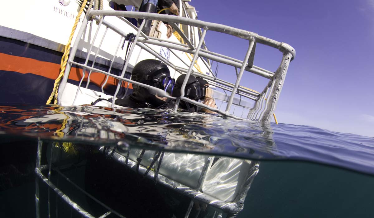 shark cage diving operators
