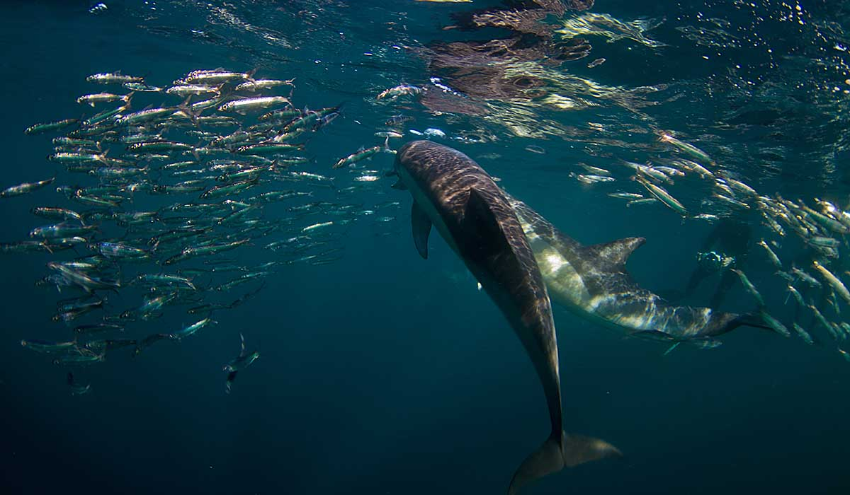 11 day sardine run package