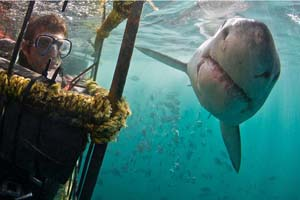 gansbaai shark diving trips