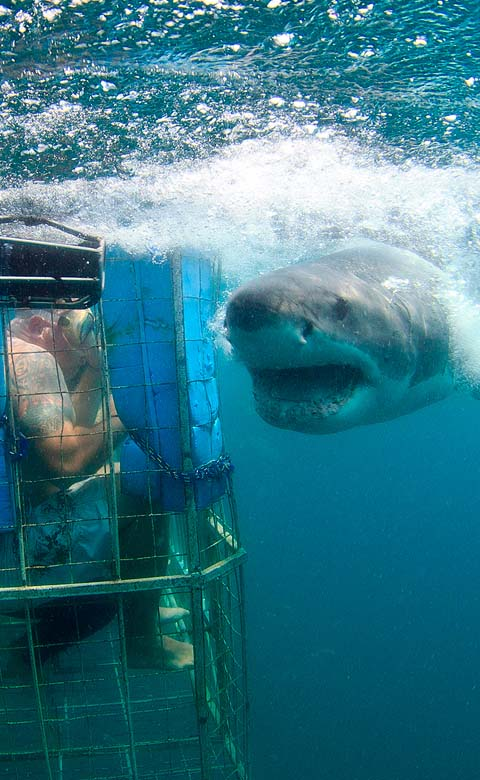 mossel bay shark diving