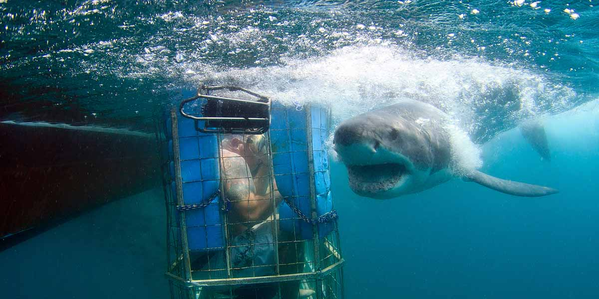 mossel bay shark cage diving