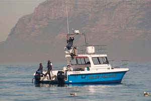 african shark eco charters