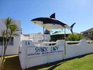 shark lady adventures gansbaai