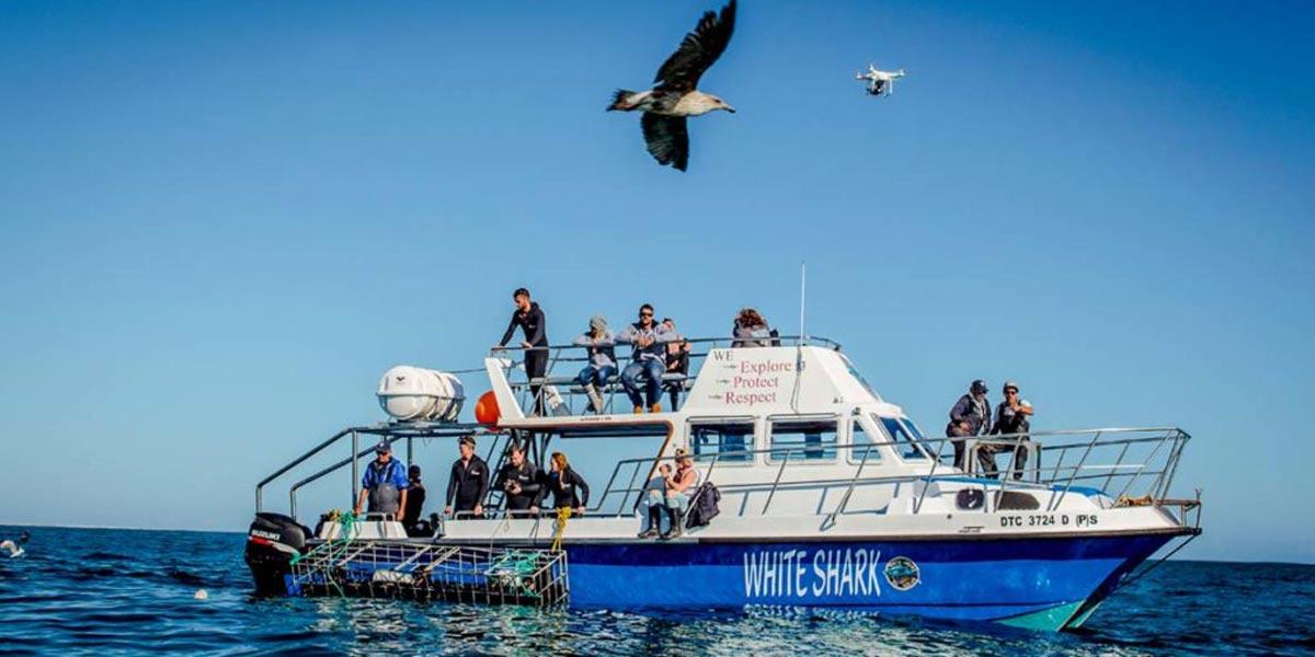 White Shark Diving Co Boat