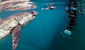 Gansbaai Shark Cage Diving