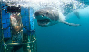 Mossel Bay Shark Diving