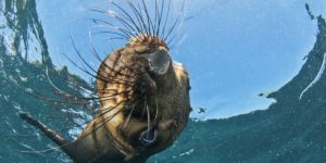 Seal Snorkeling - Cape Town