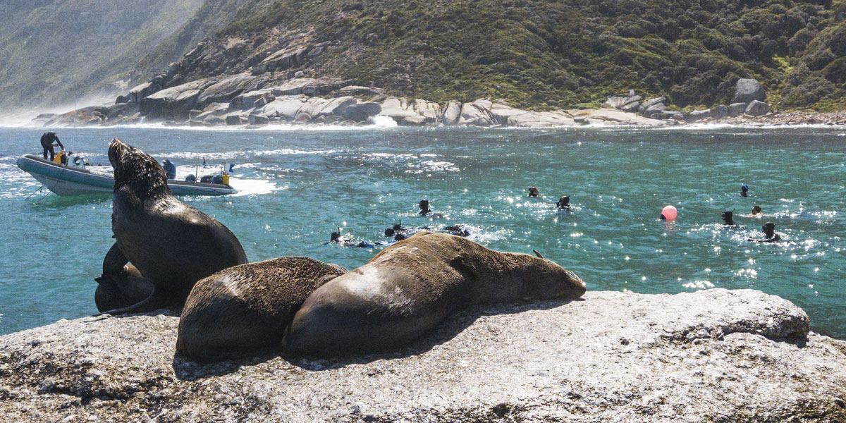 Snorkelling Or Diving With Seals In Cape Town