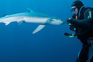 Blue & Mako Shark Diving