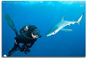 blue and mako sharks gallery