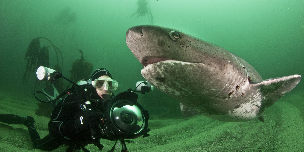Seven Gill Cow Shark Diving - Cape Town