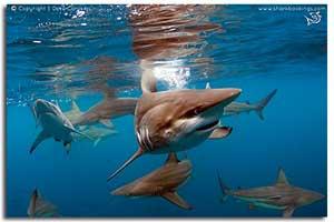 shark week durban gallery