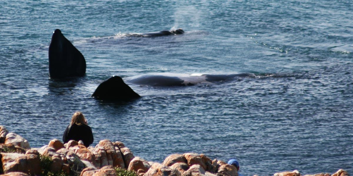 Whale Watching - De Kelders