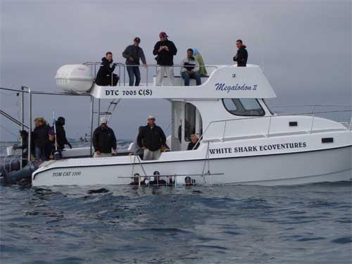 White Shark Ventures Boat