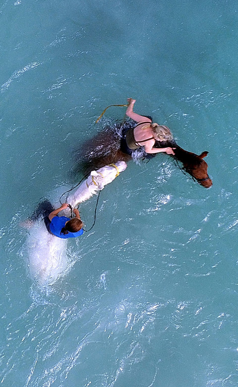 horse-riding-shark-diving and